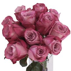 FiftyFlowers.com - Purpleberry Fresh Cut Rose