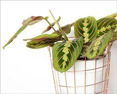 Grande tendance 2018 : les plantes à motifs | DECOCLICO Mini Terrarium, Terrariums, Paper Leaves, Decoration, House Plants, Motifs, Gardening, Gardens, Plants