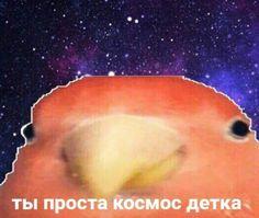 Funny Cute Memes, Cute Love Memes, Hello Memes, Russian Memes, Fun Live, Disney Phone Wallpaper, Snapchat Stickers, Quality Memes, Meme Faces