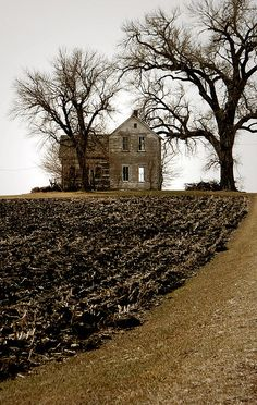 Abandoned house and some creepy trees