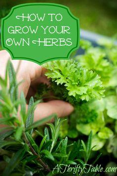 Grow your own herbs - tips & ideas