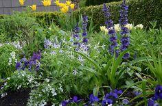Spring-Front-Garden
