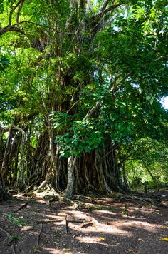 pentecost island tourism