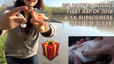 Strike of a big catfish, first asp of 2018 and the 1.000 subscribers handmade fishing lures Realwobbler Giveaway rules: https://youtu.be/U9ti39FRyR8  #fishing #angling #catfish #wels #catfishfishing #asp #giveaway #realwobbler #lures #lurefishing #customlures #handmadelures #woodenlures #crankbait #swimbaits #angeln #waller #rapfen #spinnfischen #kunstköder #gewinnspiel #wobbler #pesca #siluro #sorteo #aspio #señuelos #pescadeportiva #риболов #сом #распер #томбола #воблер #рибалка #спиннинг