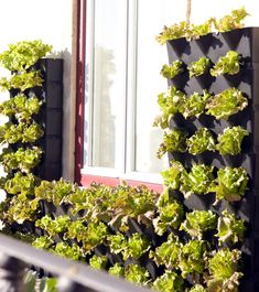 Minigarden's contemporary design is a fresh take on vertical gardening for for patios, decks, rooftops, and even for surrounding windows or covering an unsightly fence.
