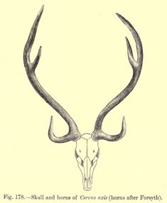 pronghorn antler line drawing - Google Search
