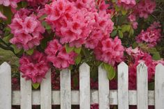 8 Deadly Plants You Might Have at Home