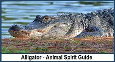 Alligator - Animal Spirit Guide