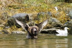 """Angelbear says, """"What choo looking at?""""  comedy-wildlife-photography-awards-shortlist-2016-30-57fb40d3a4859__880"""