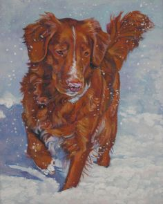 Nova Scotia Duck Tolling Retriever toller CANVAS by TheDogLover