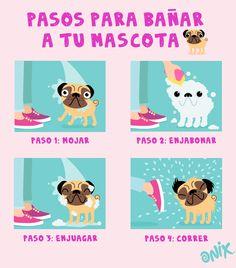 Cómo bañar a tu perro con 4 pasos