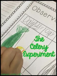 Classroom Confetti: Science Experiments. FREE Science Experiment ideas for your primary classroom! Check out the FREEBIE scientific method anchor charts and the science journal science notebook!