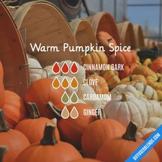 Warm Pumpkin Spice - Essential Oil Diffuser Blend