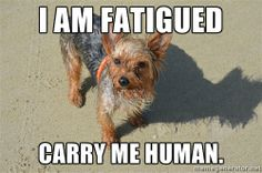 I am a personal masseur, back scratcher, gnawing post, & general slave for a French Yorkie, that understands French, Franglais, & Ulster/Scots. She thinks that is equivalent to university degree, & loves showing how cleverer she is than us.