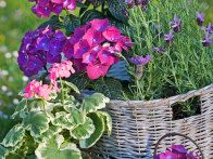 Breathe new life into a laundry basket that's seen better days by using it as a container garden. Line any basket with a sheet of plastic to keep damp soil from quickly breaking down the wicker. Don't forget to punch drainage holes in the bottom of the plastic.