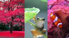De très belles couleurs