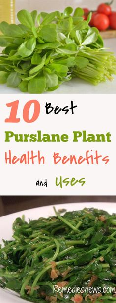 Growing Purslane How To Grow Edible Purslane In The Garden: 14 Best Purslane Benefits Images