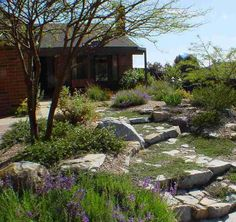 California native plant garden examples