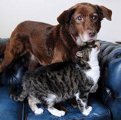 A história do gato que virou guia de um cão cego e que prova o poder da amizade entre os animais