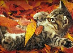 frolicking in the leaves!