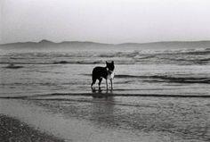 Alone Alone Art, Fine Art Paper, Saatchi Art, Ocean, Art Prints, Black And White, Canvas, Artist, Photography