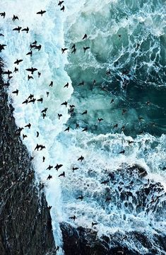 Birds & waves =two things dear to my heart