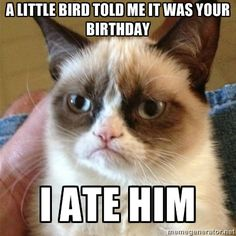 HAPPY BIRTHDAY! from Grumpy Cat~ A little bird told me it was your birthday ...I ate him