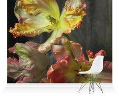 Murals of Bursting Flower Still by Trunk Archive (3000mm x 2400mm) | Shop | Surface View