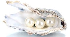 Oyster with classic white saltwater pearls - pearl buying guide.