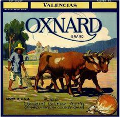 Oxnard, Ventura County, CA - Oxnard Orange Citrus Fruit Crate Box Label Advertising Art Print. Vintage Advertisements, Vintage Ads, Vintage Images, Vintage Posters, Retro Ads, Oxnard California, Southern California, Ventura California, Vintage California