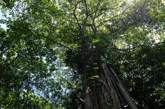 cahuita national park attraction page trees   - Costa Rica