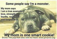 Tell them pittie but Pitbulls and American bulldogs are very damn smart