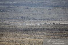 The Final Days of the Checkerboard Wild Horse Roundup,Day # 23. October 2014 Part I | Straight from the Horse's Heart
