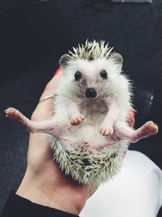 Hedgehog splits...flexibility is important after all!!