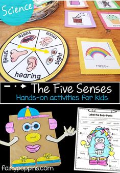 These five senses science activities include hands-on games, worksheets and sorting activities. Suitable for kindergarten, first grade and second grade. activities Five Senses Activities For Kids Five Senses Preschool, 5 Senses Activities, Preschool Science Activities, First Grade Activities, Science Experiments Kids, Science For Kids, Sorting Activities, Science Worksheets, First Grade Science