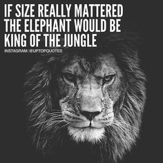 Quote, motivation, inspiration Inspirational quotes Life quotes Motivational quotes Me quotes Words of wisdom Inspirational words Badass Quotes, Good Life Quotes, Funny Quotes About Life, Success Quotes, Great Quotes, Funny Life, Funny Sayings, Quotes About Lions, Quote Life