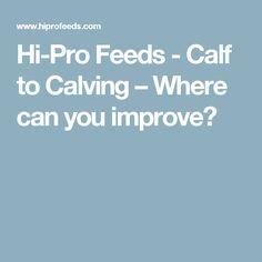 Hi-Pro Feeds - Calf to Calving – Where can you improve?