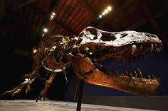 Earliest dinosaurs may have originally come from Britain new study says Salzburg, Tree Study, Tyrannosaurus Rex, Science And Nature, T Rex, Fossil, Britain, Lion Sculpture, Cold