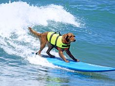 """Find out how these four-legged fundraiser is really """"making waves!"""" #pets"""