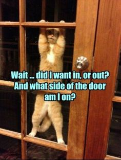 Funny Animals Pictures With Captions