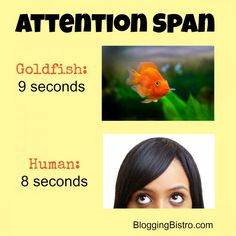 The average person's attention span is 8 seconds. Learn why this is important when designing a mobile-friendly website.