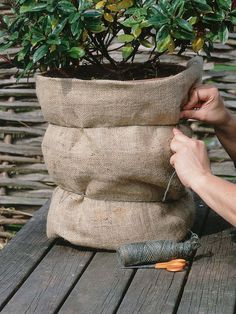 Plants Are Not The Only Things That Require Protection Terracotta Pots May Well Crumble And