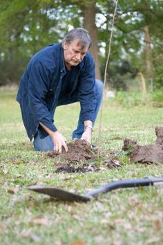 Planting Guide for Fruit Trees