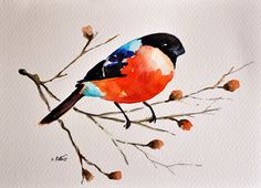 ORIGINAL Watercolor painting 6x8 inch, Bullfinch Illustration, Bird Illustration