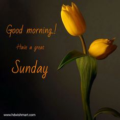 Sunday Morning Images, Happy Sunday Pictures, Sunday Gif, Happy Sunday Morning, Happy Sunday Friends, Have A Great Sunday, Happy Sunday Everyone, Morning Gif, Happy Sunday Messages