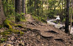Norwegian Wood photograph by Joseph Derda
