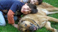 Dos hermanos podrían haberse asfixiado sin la ayuda de su atenta perra Bonnie – AB Magazine