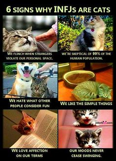#infj and #cats