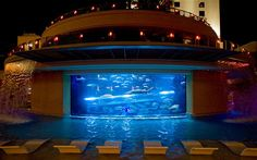 The world's best hotel pools -  Golden Nugget, Las Vegas  Only in Las Vegas would you find a swimming pool attached to a shark aquarium. Ok, maybe Dubai.