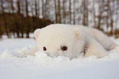 Este pequeño oso polar vio la nieve por primera vez y supo que estaba en casa